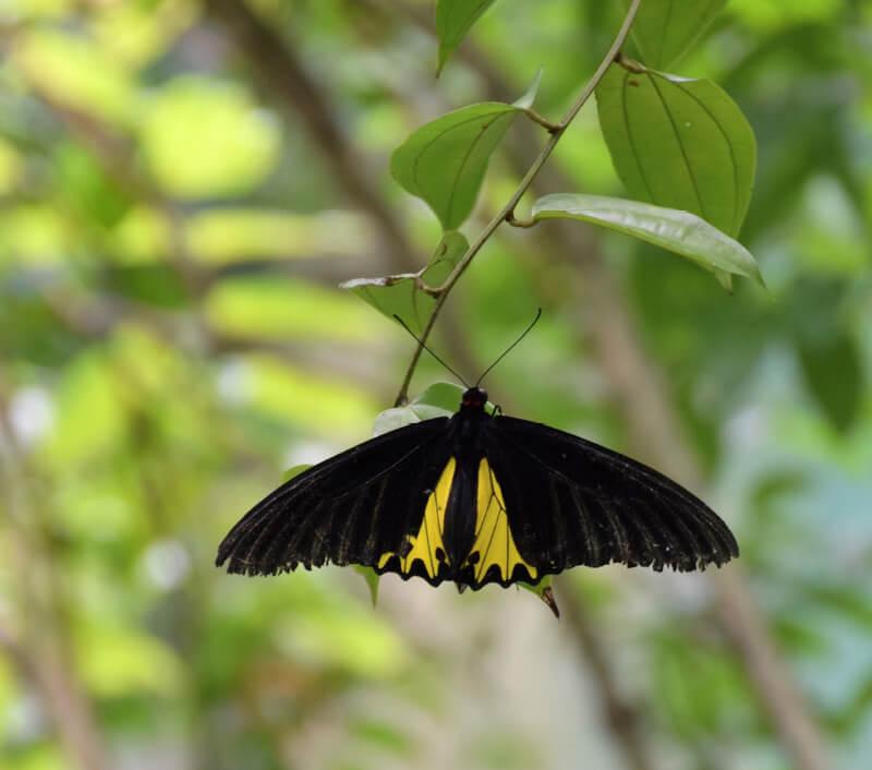 Foto: Kwang Chun Gan / Shutterstock.com