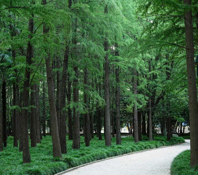 Gongqing Forest Park in Shanghai. Foto: thanat sasipatanapa / Shutterstock.com