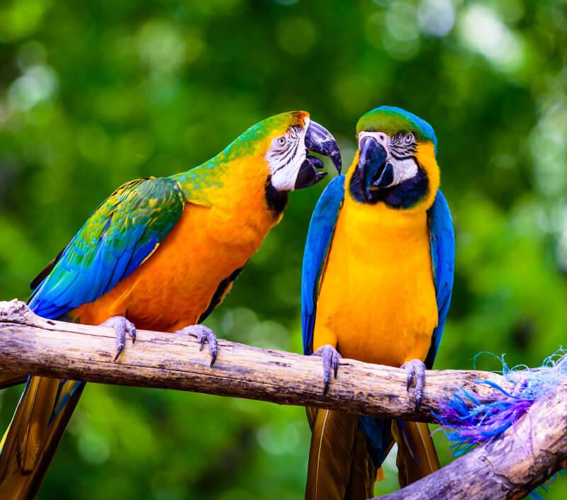 Foto: Chris Greig Photography / Shutterstock.com