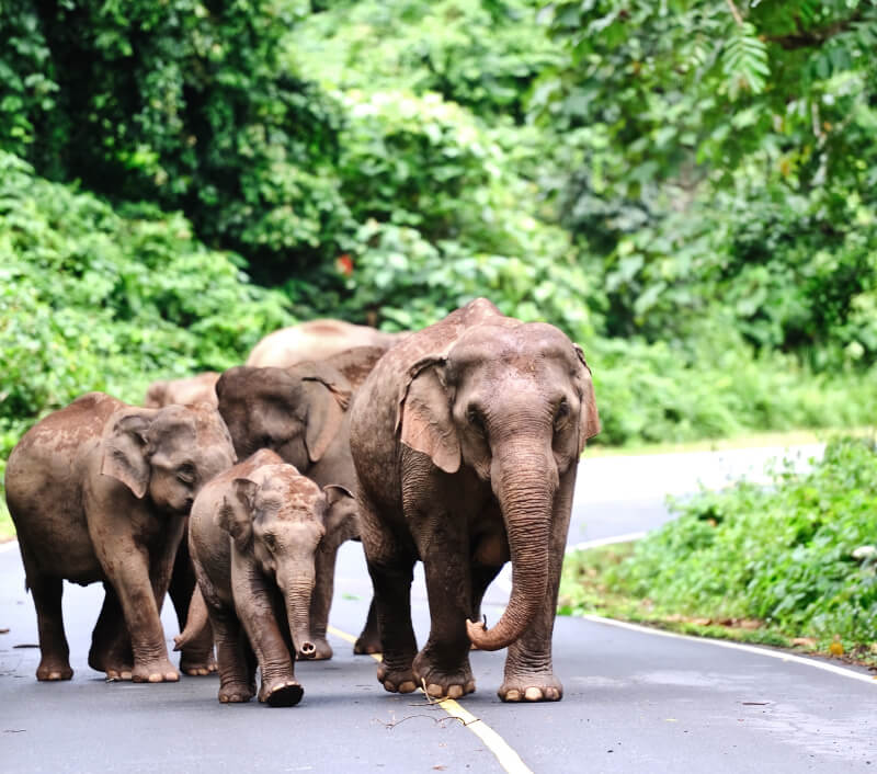 Der Khao Yai Nationalpark in Thailand. Foto: nutsiam / Shutterstock.com
