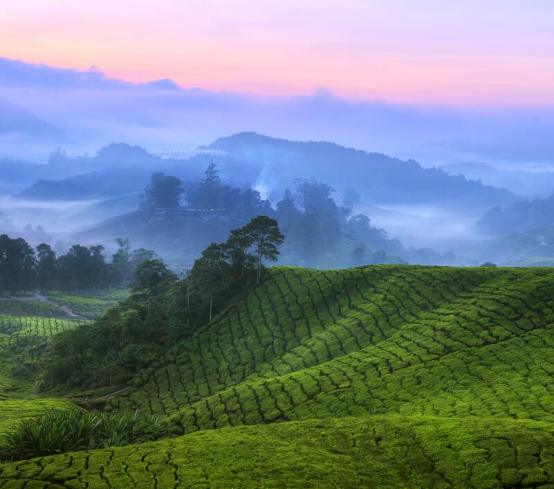 Foto: szefei / Shutterstock.com